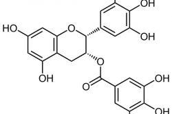 EGCG: The Amazing Antioxidant Found in Green Tea