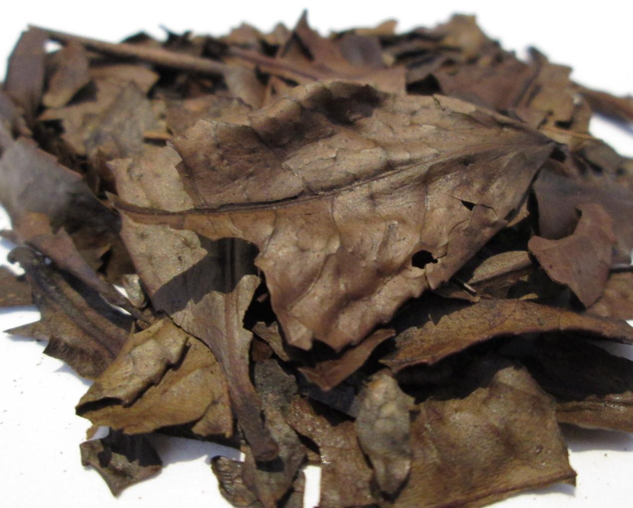 Kyobancha from Obubu