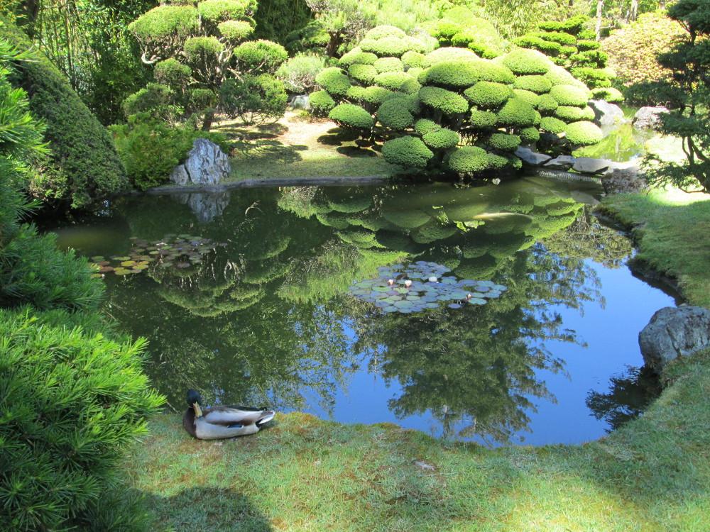 japanese tea garden san francisco pond - Japanese Garden San Francisco
