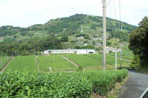 Sugimoto Seicha tea factory tour