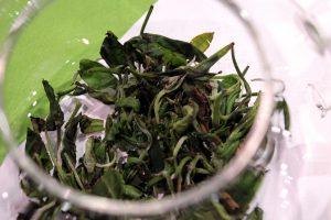 Fresh-leaf tea from Millennia Tea at WTE2017